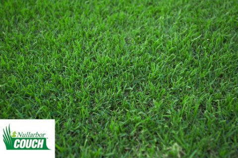 Nullabour couch turf available from The Yard Landscape Centre in Doonan