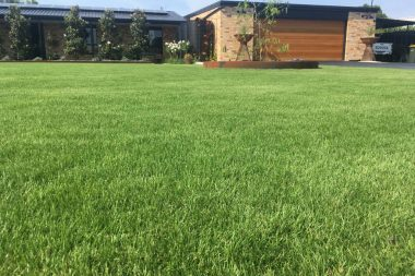 Sir Grange Turf available at The Yard Landscape and Garden Centre, Doonan
